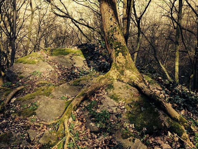 granice priroda jaro (2)