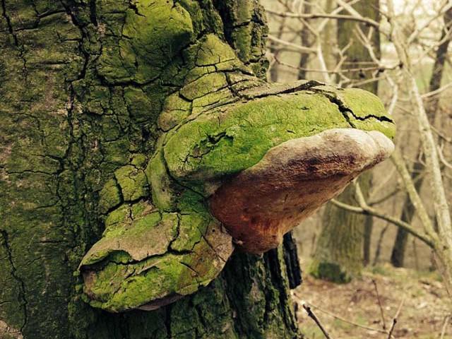 granice priroda jaro (3)
