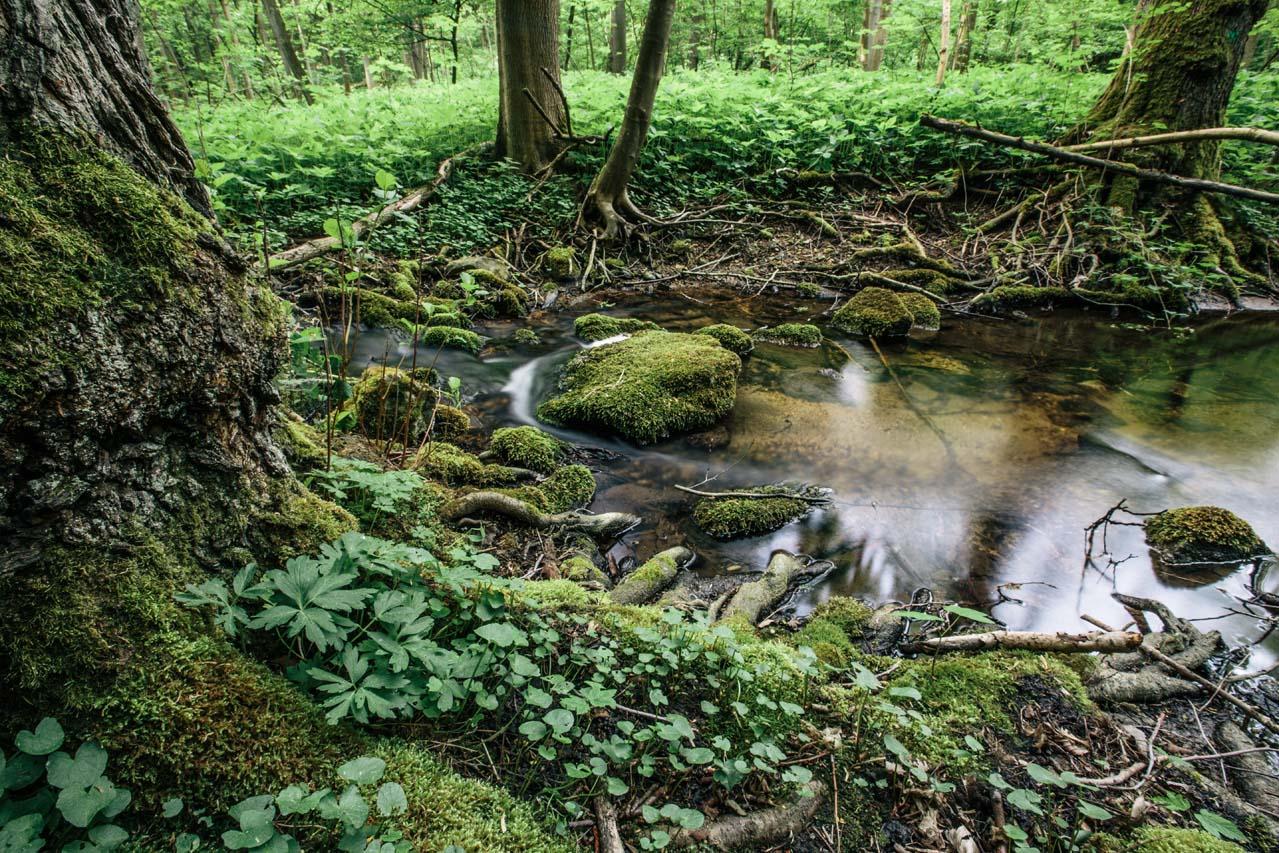 granice priroda lubos dolezal (3)