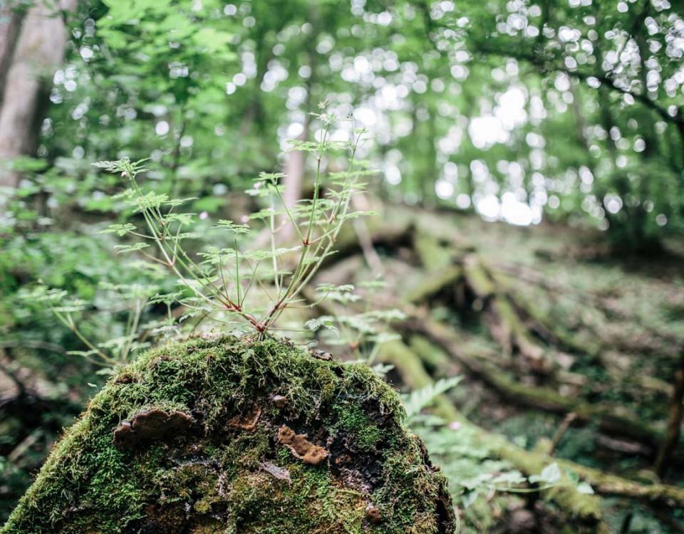 granice priroda lubos dolezal (5)