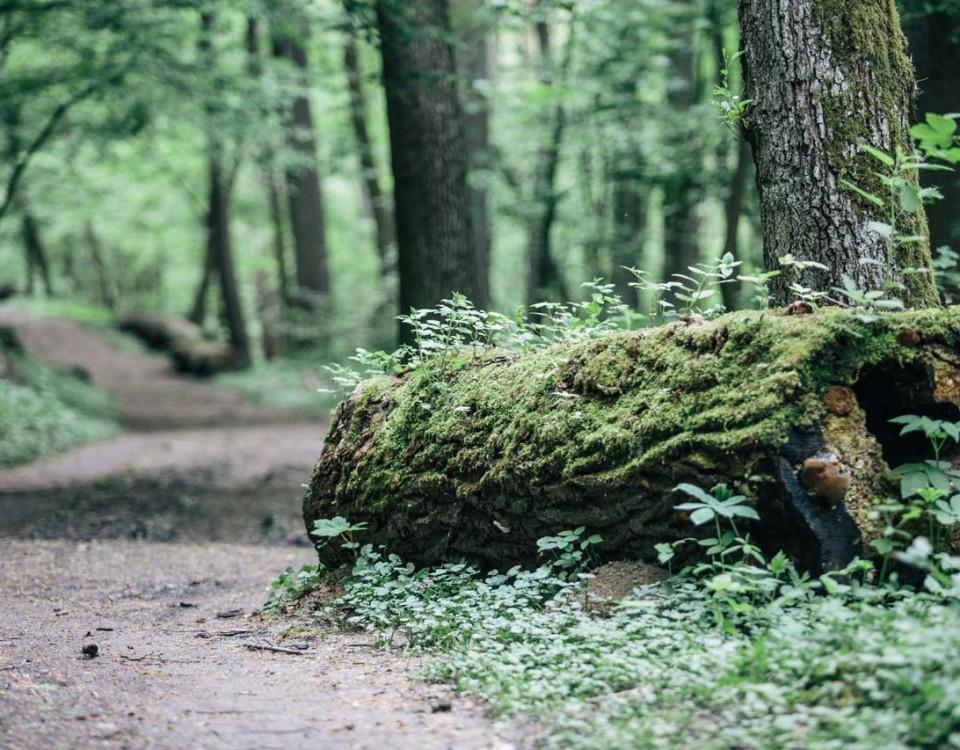granice priroda lubos dolezal (6)