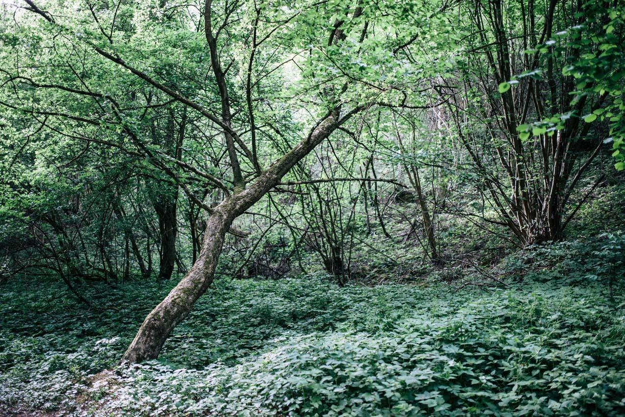 granice priroda lubos dolezal (7)